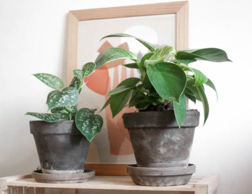 Top 5 des plantes 2020